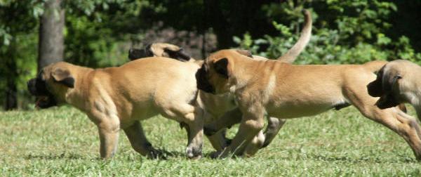 puppies run2_edited-2