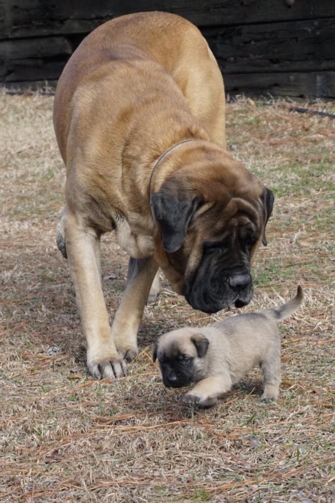 grantham pup 2
