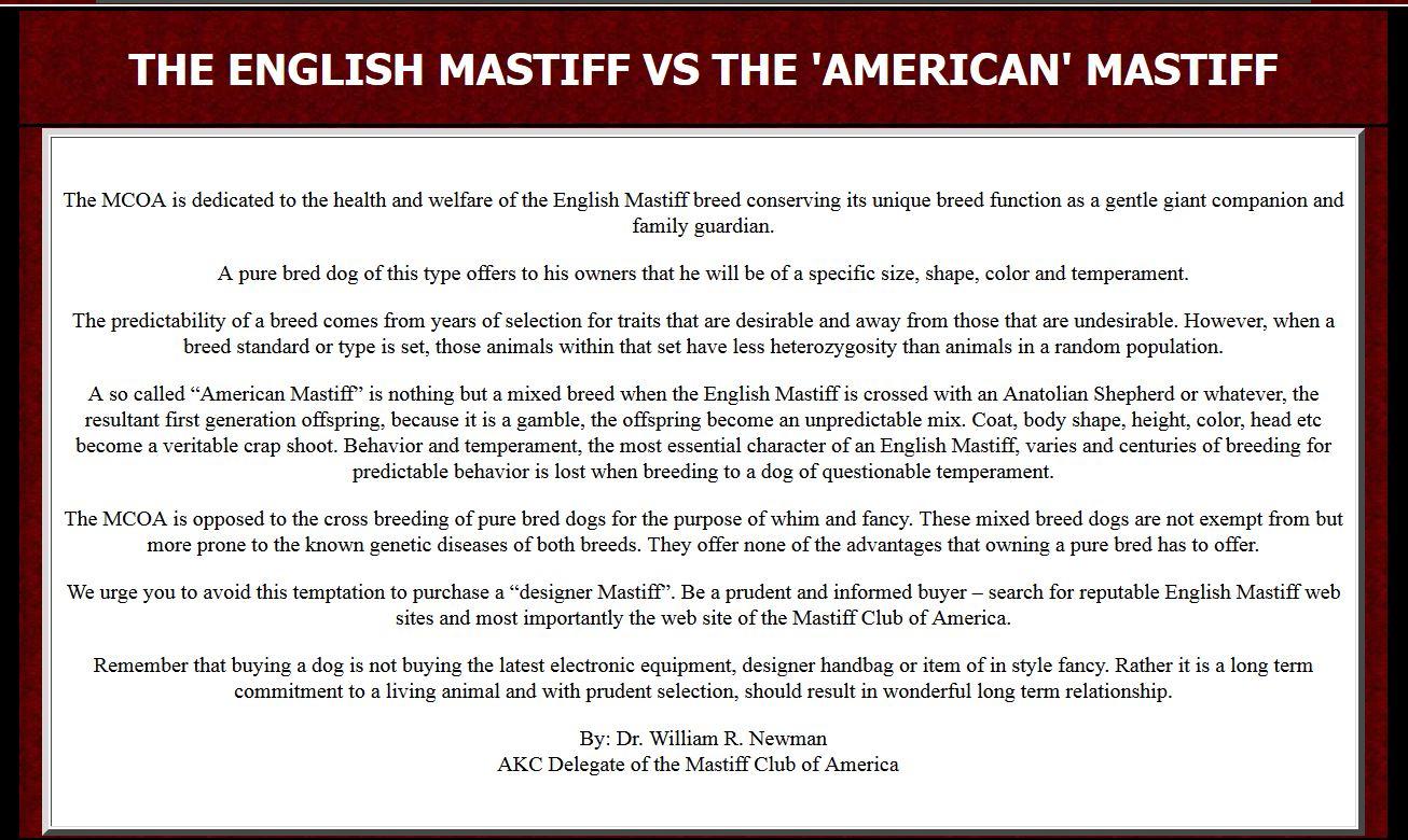 English Mastiff vs the American mastiff