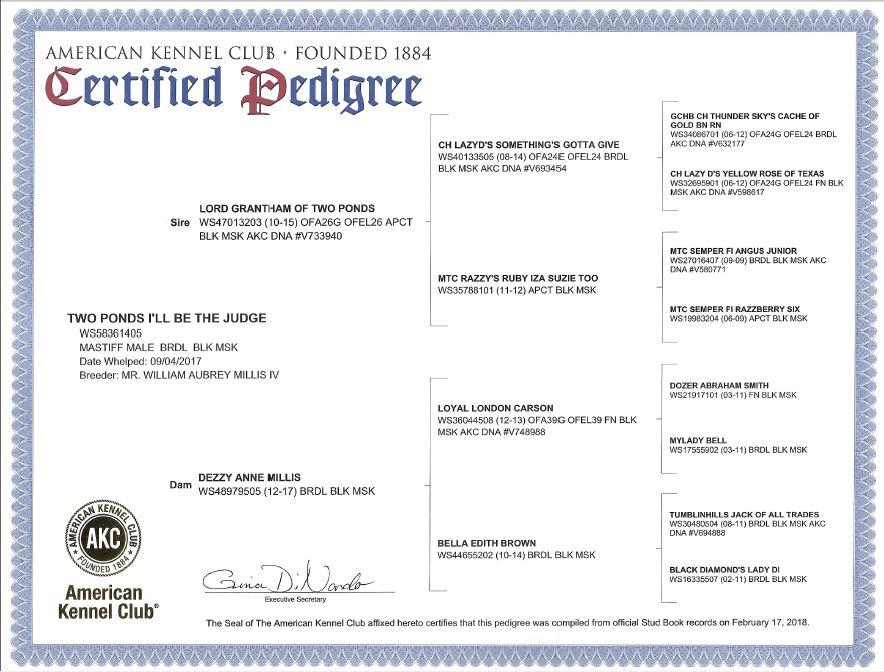 Judge AKC Pedigree
