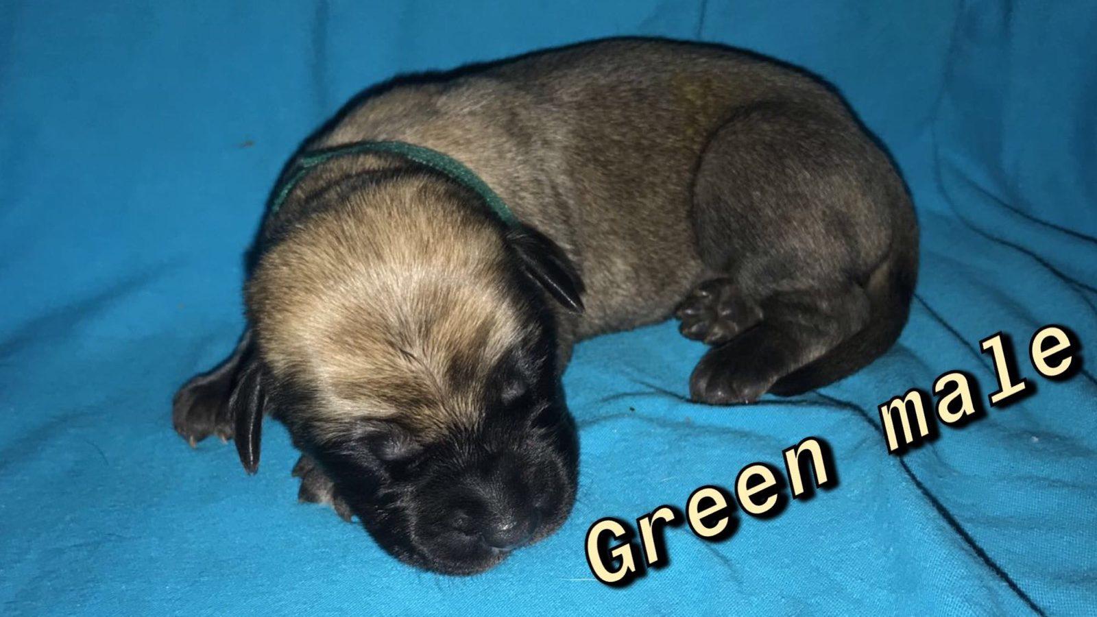Image-Green FM