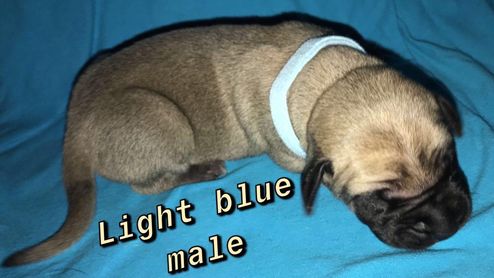 Image-Light blue FM