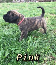 Pink BF 4 weeks
