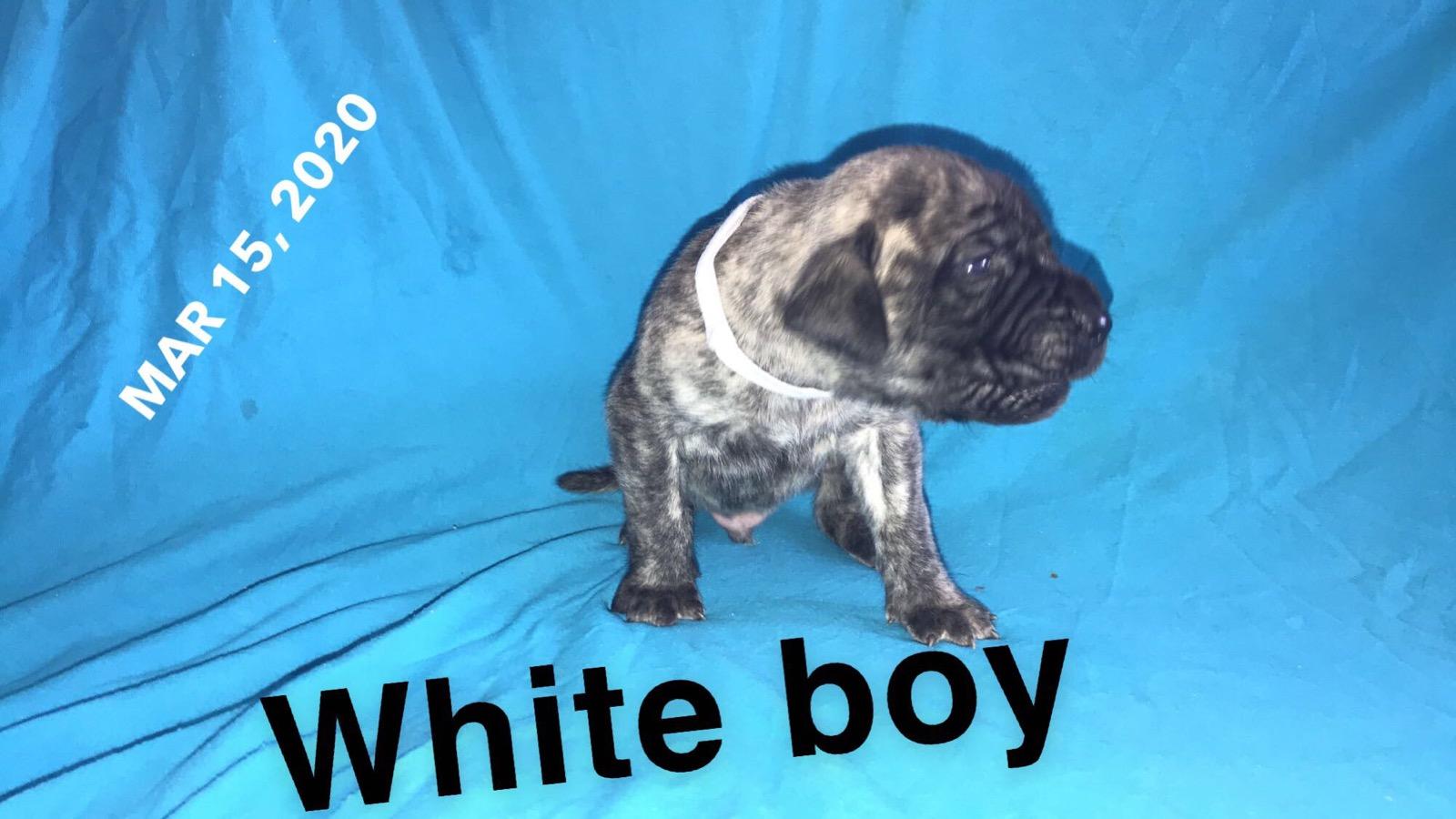 White BM 3w