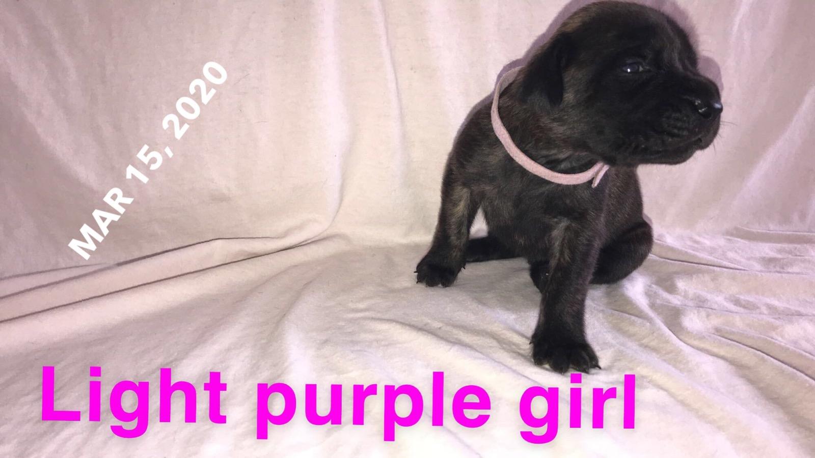 light purple BF 3w