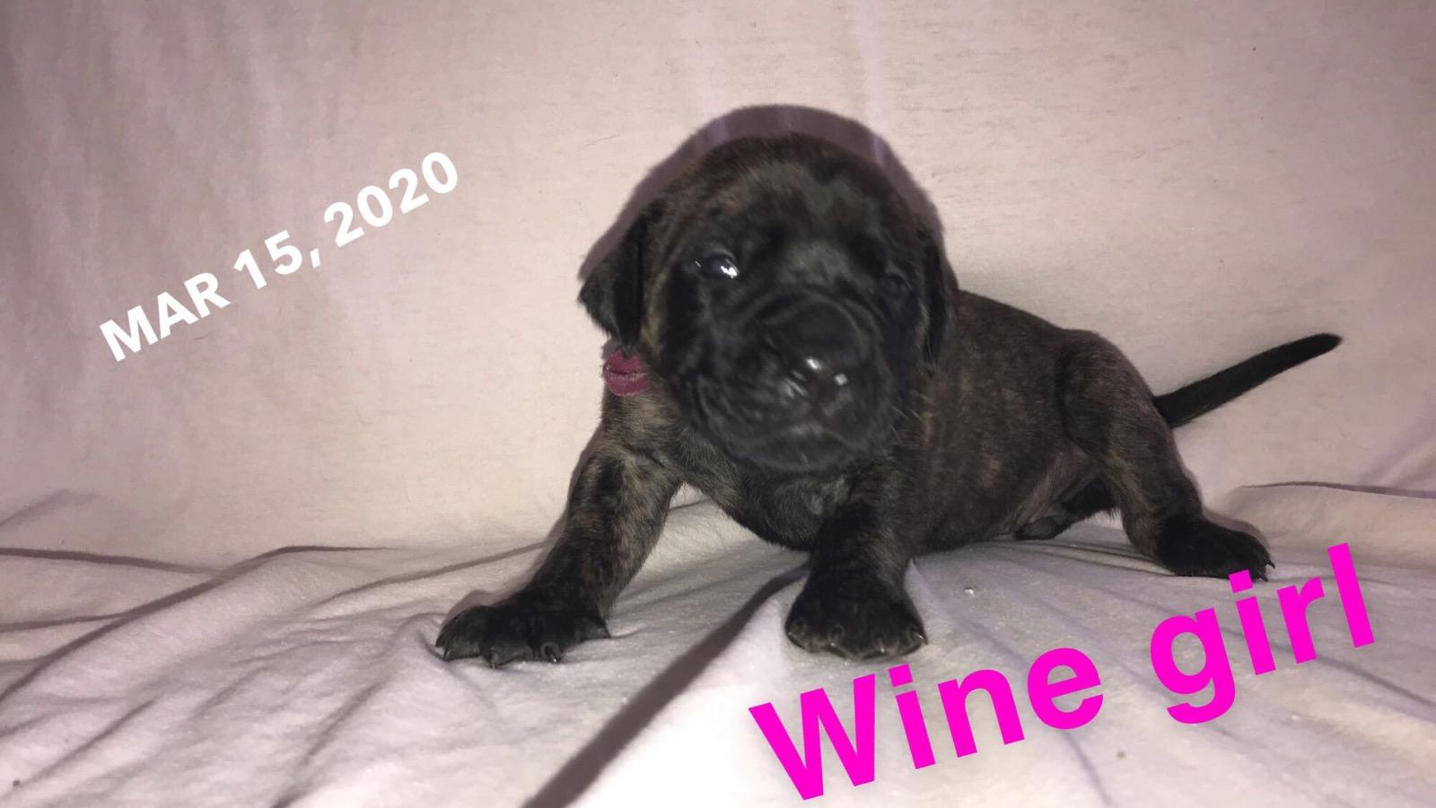 wine BF 3w